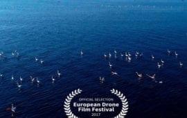 Το Δέλτα του Έβρου με drone… Δείτε το βίντεο!