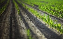 Αλλαγή κατανομής των επιδοτήσεων, προαναγγέλλει στο «Έθνος» ο υπουργός Αγροτικής Ανάπτυξης