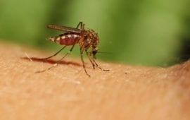 Τέσσερις θάνατοι από τον ιό του Δυτικού Νείλου