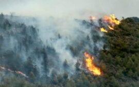 Μεγάλη πυρκαγιά σε δασική έκταση στην Αρχαία Ολυμπία- Ενισχύονται συνεχώς οι πυροσβεστικές δυνάμεις