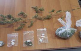 Συνελήφθη ημεδαπός κατηγορούμενος για καλλιέργεια και κατοχή ναρκωτικών